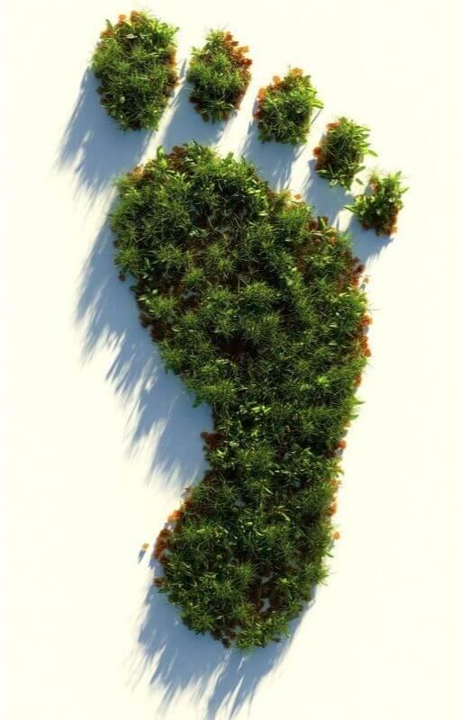 forêt en forme de pieds