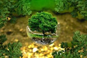 arbre à l'intérieur d'une bulle de verre