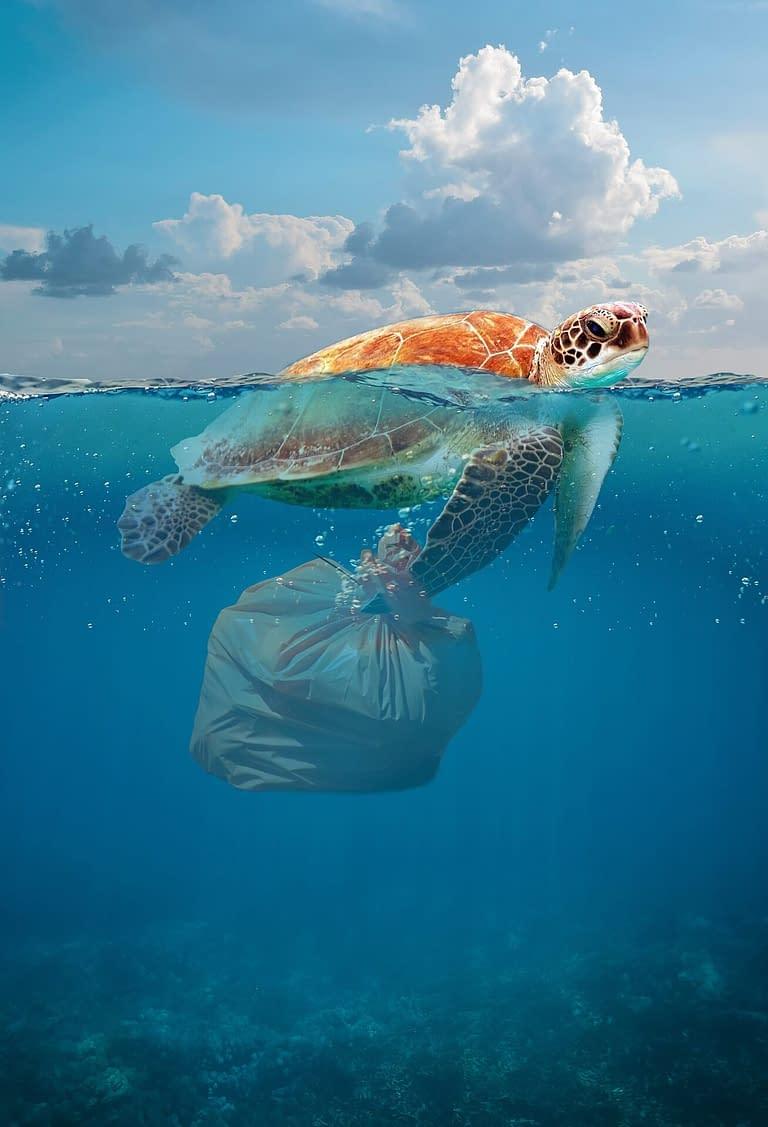 tortue avec un sac poubelle en plastique